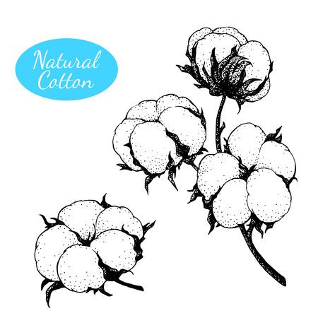 Conjunto de vectores de planta de algodón dibujado a mano. Rama con flores. Ilustración de vector