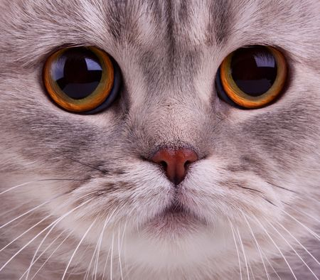 Closeup of cats face photo