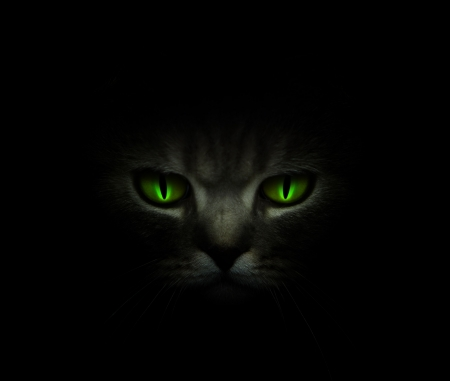 13th: Green cats eyes glowing in the dark Stock Photo