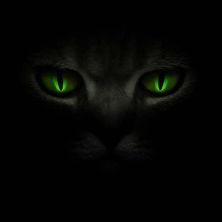 evil eyes: Green cats eyes glowing in the dark Stock Photo