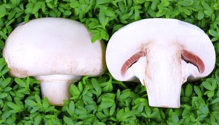 Mushroom half on fresh green cress  photo