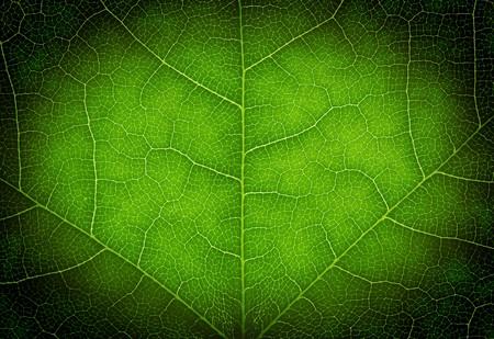 Heart shape on a green leaf texture photo