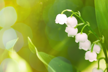 Lily of the valley on green background with sunshine