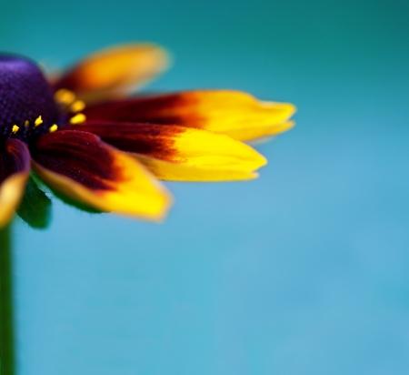 Close-up of beautiful flower photo