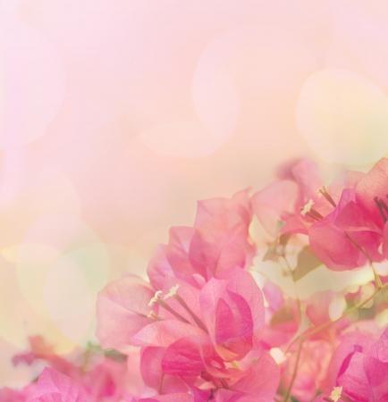 ピンクの花と美しいの抽象的な花の背景。ボーダー設計
