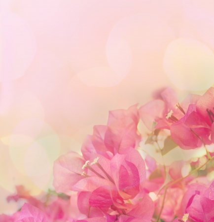 Beautiful abstract floral background with pink flowers. Border design photo