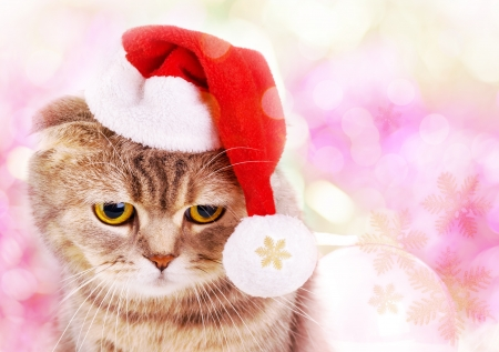 Cute Christmas cat in Santa Claus hat on colorful background Stock Photo