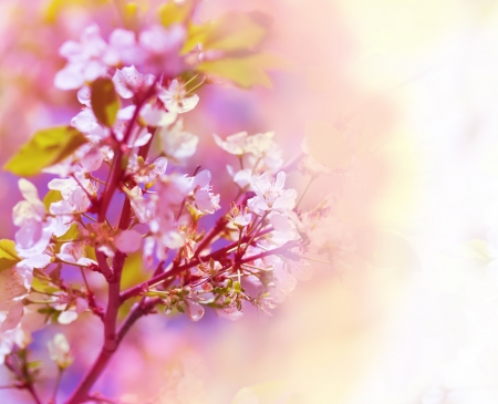 yellow blossom: Beautiful spring floral background