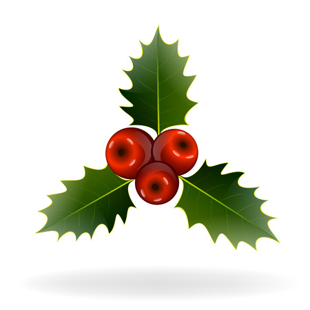 Holly berries on white background. Christmas decorations.  Vector