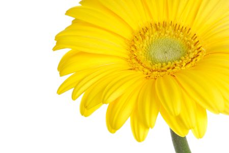 Yellow gerbera (daisy). Picture was made in a studio. Stock Photo - 795671