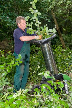 shredder machine: Middle aged forest worker with shredder