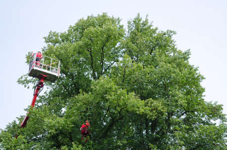 Man working in an elevating platform truck beside a tree photo