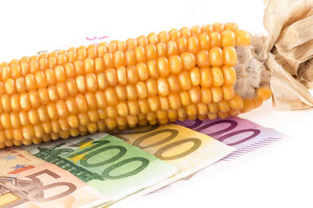 Euro banknotes corn cob in front of white background Stock Photo - 16455495