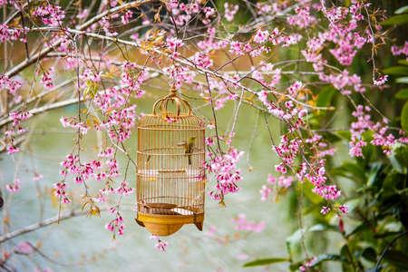 Flowers blossom in Mang Den district Kon Tum province central Vietnam