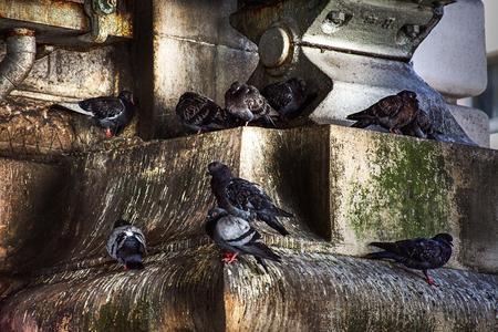 Pigeons roosting in urban stonework