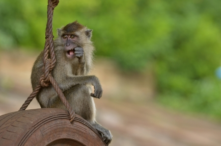 Serious monkey poking in the mouth
