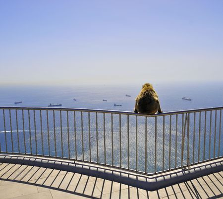 Lonely monkey from Gibraltar stares at ocean photo