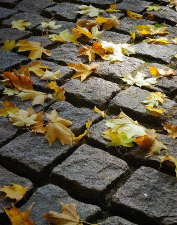 Maple leaves on cobblestones in a ray of the sun