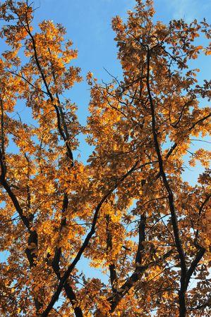 Autumn tree against the blue sky