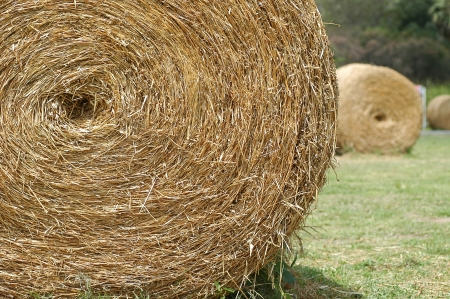 Hay bale rolls in a lush green field photo