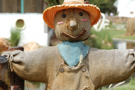 Scarecrow in the gargen                               photo