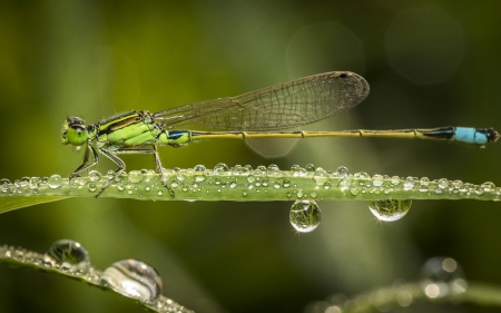 Azure Damselfly is island leaves  photo