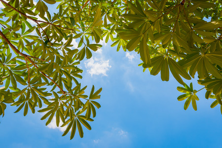 directly below: Branch green leaves in sunny day Stock Photo