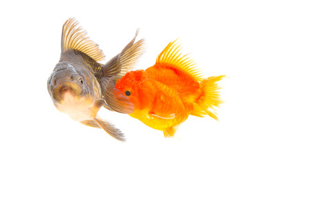 collide: Goldfish are two collide
