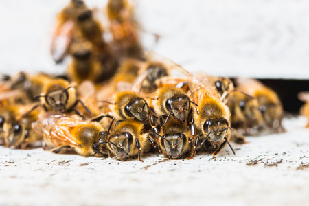 bee: The bees for nectar