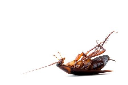 Kakkerlakken dode op een witte achtergrond Stockfoto