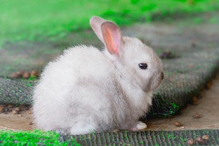 keep an eye on: White Rabbit in farm Stock Photo