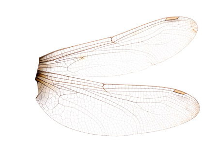dragonfly wings isolated on white background. File contains a clipping path. Archivio Fotografico