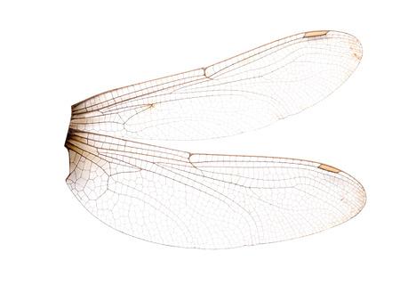 Dragonfly vleugels geïsoleerd op een witte achtergrond. Bestand bevat een uitknippad. Stockfoto