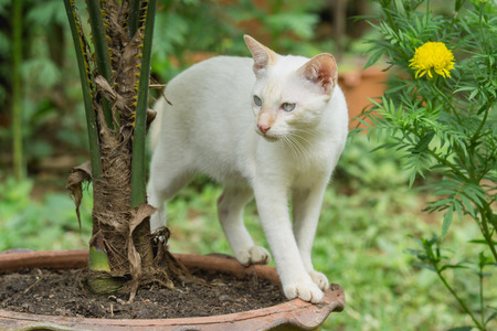 White cat standing on a plant pot in the garden. Stock Photo