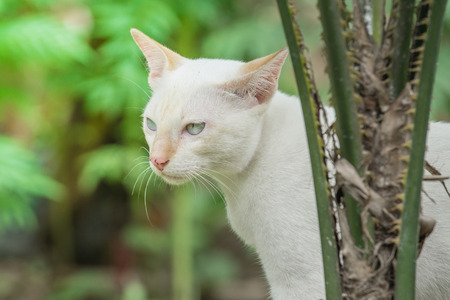 close up White cat in the garden. Stock Photo
