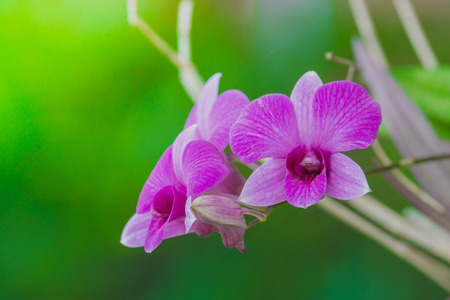green and purple: purple Orchid flowers on green nature background