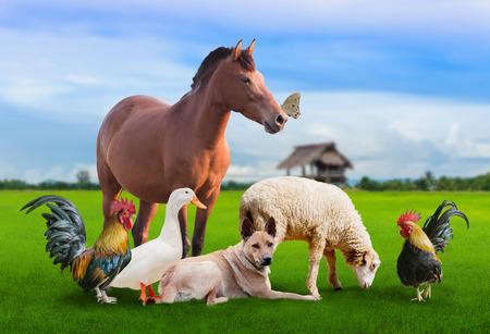 Groupe d'animaux d'espèces différentes sur la pelouse, le poulet bantam, canards blancs, moutons, Brown horseBrown chien, papillon Banque d'images - 63357109