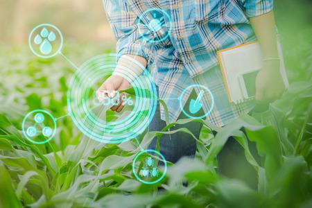 agricultor inspeccionar el maíz en el jardín de la agricultura con el concepto Tecnologías modernas.