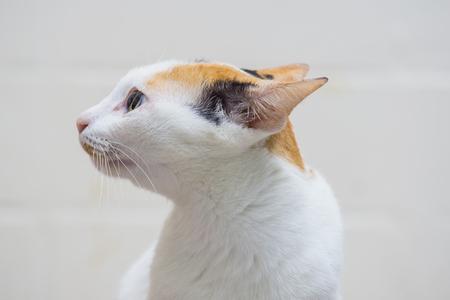 Close up white cat on white background