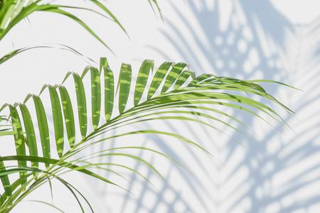 palmbladeren en schaduwen op een witte muur