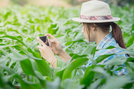 Women Farmers are using the telephone to check the corn in corn fields.