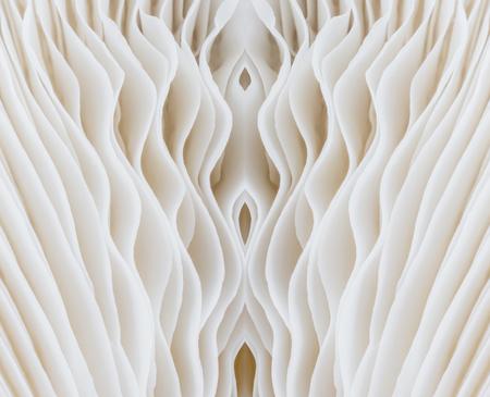 gill: abstract background macro image of Sajor-caju Mushroom