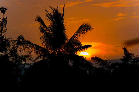 coconut palm tree silhouette at sunset background
