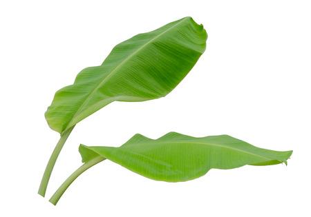 흰색 배경에 고립 된 두 바나나 잎, 파일에는 클리핑 패스가 포함되어 있습니다.
