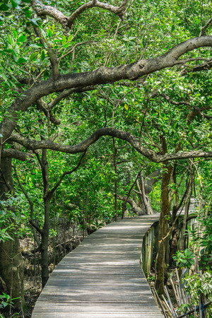 Wood floor with Bridge in the forest in mangrove forest. Stock Photo