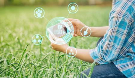 landbouwer knoflook in de tuin van de landbouw met concept inspecteren Moderne technologieën.