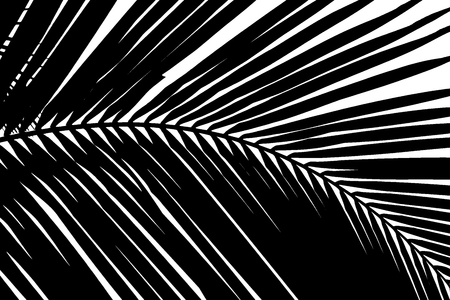 black and white abstract background of palms leaf
