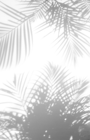 abstract background of shadows palm leaves on a white wall. White and Black Imagens - 85448427