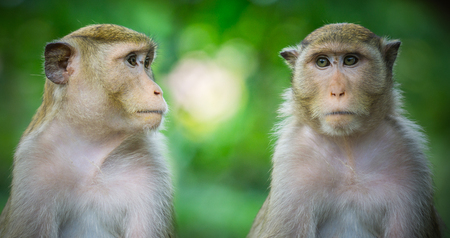 close up two monkeys in green nature forest background