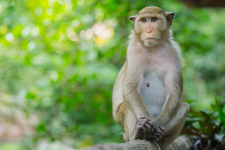Monkey lives in a natural forest of Thailand.